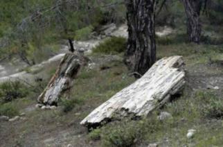 Απολιθωμένο δάσος Λευκίμμης:  Ευρήματα ηλικίας 40 εκατ. ετών