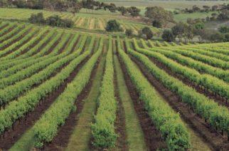 Καίσας: Καταργείται μέσα στο 2017 ο φόρος κατανάλωσης στο κρασί