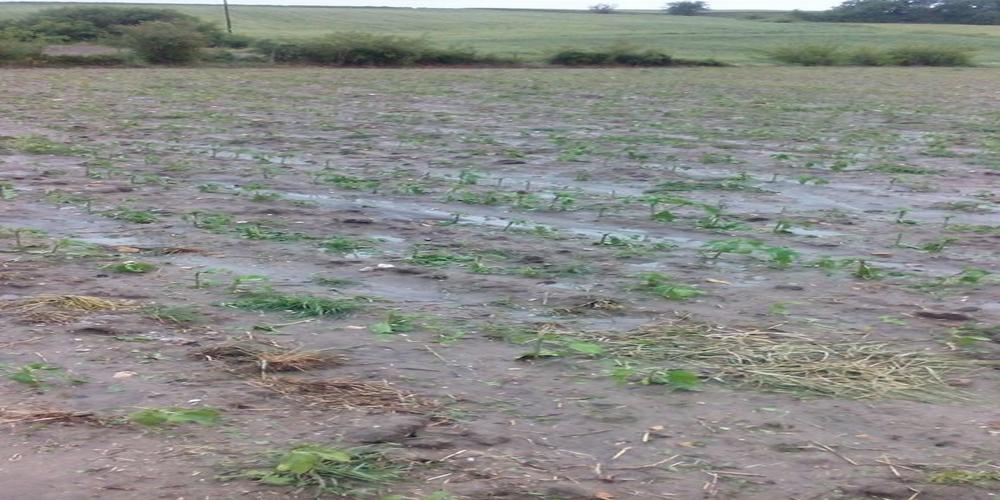 Τραβάνε τα μαλλιά τους οι αγρότες Διδυμοτείχου και Ορεστιάδας. Το χαλάζι ισοπέδωσε τις καλλιέργειες (video+φωτό)