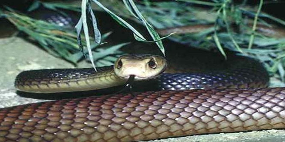 Τον τσίμπησε φίδι και ήρθε Αλεξανδρούπολη γιατί στην Καβάλα δεν είχαν… ορό!!!