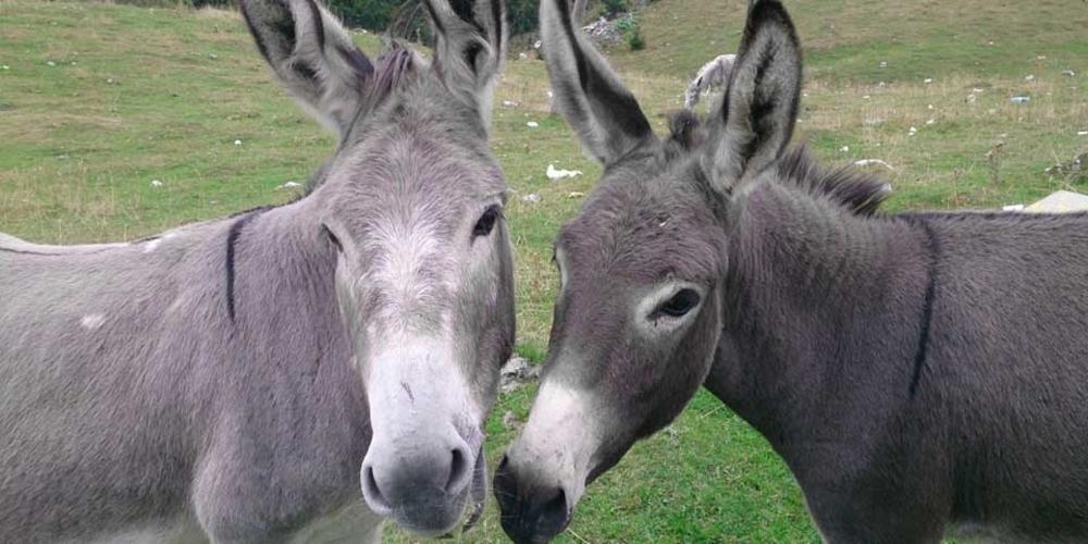 Γαϊδούρια, μουλάρια και άλογα επιστρέφουν σε ΦΠΑ 13%!!!