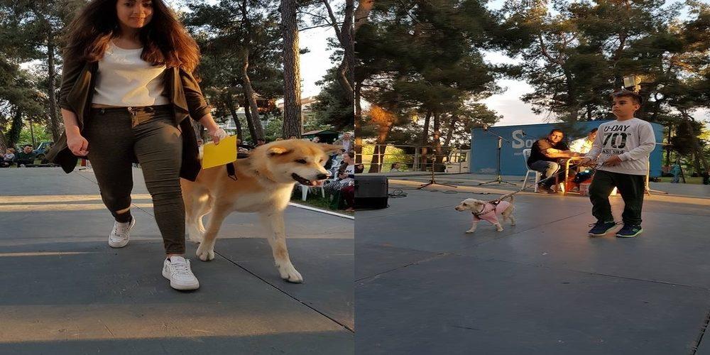 Μ' επιτυχία τα 2α καλλιστεία σκύλων χθες στην Ορεστιάδα
