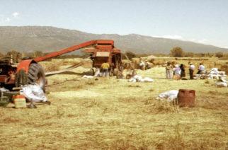 Ιστορικό μουσείο Ορεστιάδας: Η σπορά και ο αλωνισμός στον Έβρο τα παλιά χρόνια(video)