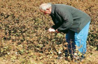 Τον Αύγουστο οι συντάξεις στους αγρότες που γεννήθηκαν το 1950