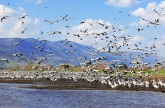 Δημοσχάκης: Η Κυβέρνηση να αξιοποιήσει τις Λιμνοθάλασσες στο Δέλτα του Έβρου