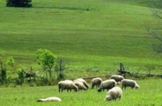 Δημοσχάκης: Ταλαιπωρία χωρίς τέλος των κτηνοτρόφων για τα βοσκοτόπια
