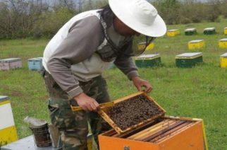 Άρχισε η υποβολή αιτήσεων για οικονομική ενίσχυση μελισσοκόμων
