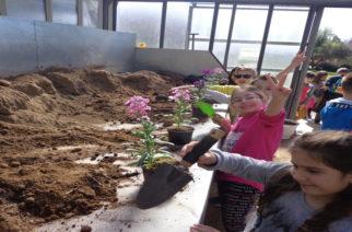 Αλεξανδρούπολη: Οι μαθητές γίνονται μικροί γεωργοί