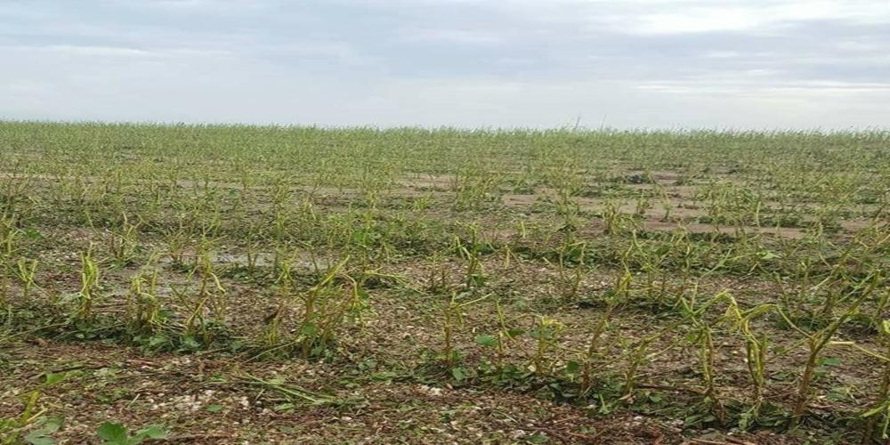 ΒΙΒΛΙΚΗ ΚΑΤΑΣΤΡΟΦΗ: Φοβερές ζημιές στις καλλιέργειες από το χαλάζι στο βόρειο Έβρο