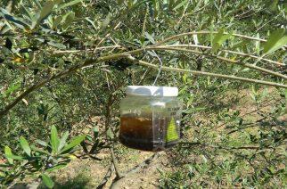 Στόχος καταπολέμησης ο… δάκος, μετά τα κουνούπια στον Έβρο. Παγίδες και ψεκασμοί!!!