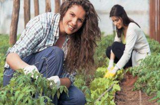 Βουλευτές ΣΥΡΙΖΑ Έβρου: Να ενταχθούν και οι επιλαχόντες νέοι γεωργοί στο πρόγραμμα