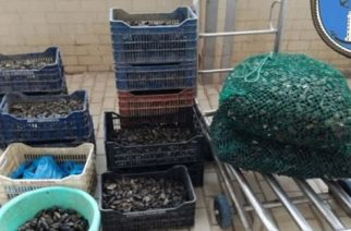 Αλεξανδρούπολη: Τους έπιασαν στα πράσα να επεξεργάζονται μύδια-φαρμάκι