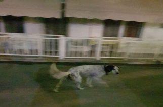 Σαμοθράκη: Σκύλος που δείχνει να έχει χαθεί στα Θέρμα