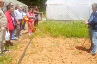 Έβρος: Η εκπαίδευση για τα αρωματικά φυτά περνάει από το χωράφι