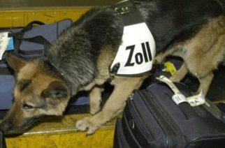 Αλεξανδρούπολη: Ο σκύλος μπούκαρε στο σπίτι του, βρήκε τα ναρκωτικά και τον συνέλαβαν