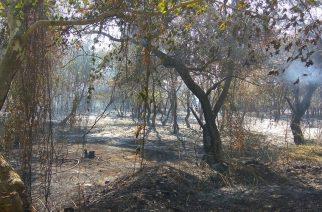 """Πυρκαγιά Πλατανότοπου Μαίστρου: Αφορμή για την """"θωράκιση"""" του"""