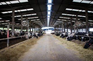 ΕΒΡΟΦΑΡΜΑ-CAMPUS: Η κορυφαία ευρωπαϊκή φάρμα αγελαδοτροφίας, συνδυάζει παράδοση και σύγχρονη τεχνογνωσία
