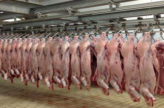 To δημοτικό σφαγείο Φερών υποδομή για την ανάταξη της κτηνοτροφίας στον Νότιο Έβρο