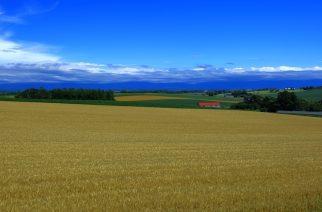 Ορεστιάδα: Διαλέξεις στα χωριά για τα χειμερινά σιτηρά από το Δ.Π.Θ.