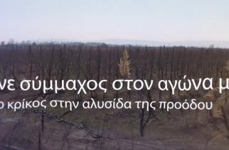 """""""Προτιμήστε τα τοπικά προϊόντα"""": Επίκαιρη πάντα η καμπάνια του Αγροτικού & Κτηνοτροφικού Συλλόγου Αλεξανδρούπολης"""