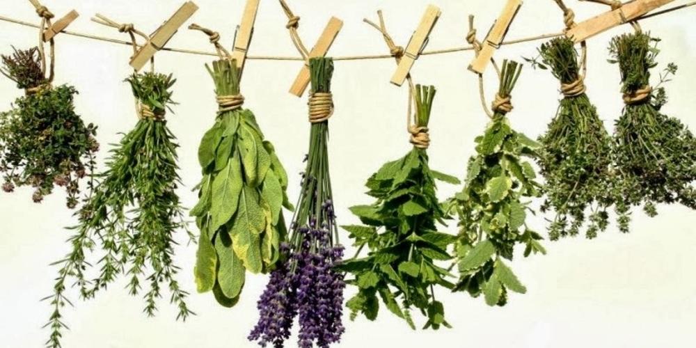 """Αλεξανδρούπολη: Ομιλία αύριο με θέμα """"Βότανα και αρωματικά φυτά"""""""