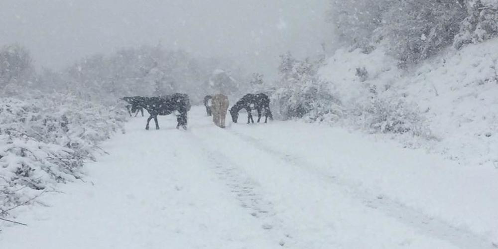 Χιονίζει από το μεσημέρι σε χωριά του ορεινού Έβρου. Δείτε εκπληκτικά video+φωτό