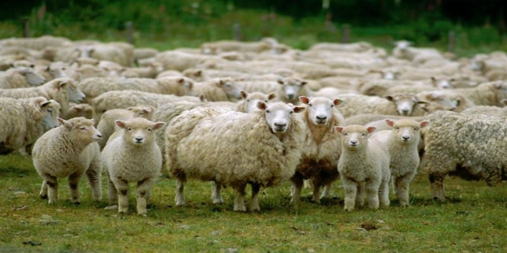 Χορήγηση ενισχύσεων σε κτηνοτρόφους του Έβρου για τον χειμώνα του 2016