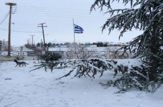 Έβρος: Χιόνια απόψε και μέχρι απόγευμα Τετάρτης και ολικός παγετός ως την Πέμπτη