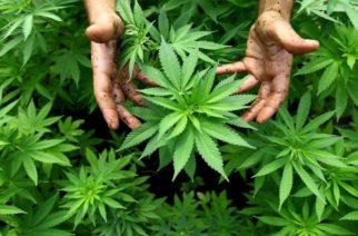 Δυο συλλήψεις για ναρκωτικά σε Ορεστιάδα, Μικρό Δέρειο Σουφλίου