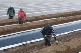 Εντυπωσιακό ΒΙΝΤΕΟ με συγκομιδή των φημισμένων σπαραγγιών Έβρου που είναι περιζήτητα στην Ευρώπη