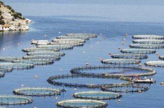 «Ψάρια πουλώ», η «Σαμοθράκη της θάλασσας» φέρνει σε αξία μισό δισ. ευρώ