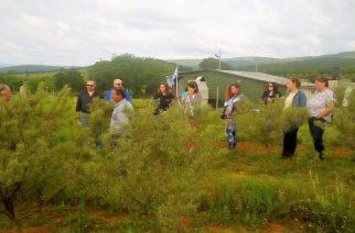 """Οργανώνεται περισσότερο η Ομάδα Παραγωγών """"Θράκης Θησαυρός"""" για τα αρωματικά φυτά"""