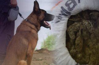 Αλεξανδρούπολη: Ο αστυνομικός σκύλος… ξετρύπωσε τα ναρκωτικά σε επιχείρηση 35χρονου που συνελήφθη