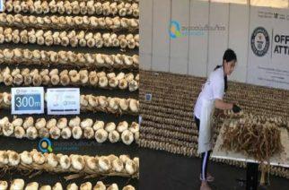 ΕΙΝΑΙ ΓΕΓΟΝΟΣ: Το νέο ρεκόρ Γκίνες πλεξούδας σκόρδου είναι ελληνικό, εβρίτικο και απ' τη Νέα Βύσσα
