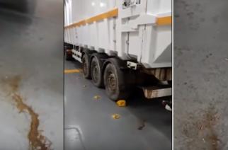 ΒΙΝΤΕΟ: Σκουλίκια και ακαθαρσίες στη μεταφορά των σκουπιδιών. Κάποιοι επιμένουν να ταξιδεύουν και επιβάτες μαζί