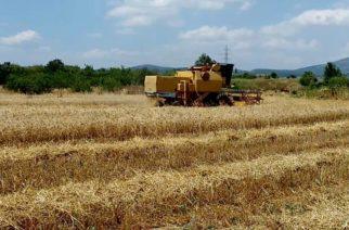 Κραυγή αγωνίας Προέδρων Τοπικών Κοινοτήτων Β. Έβρου για τις ζημιές σε καλλιέργειες λόγω καιρικών συνθηκών