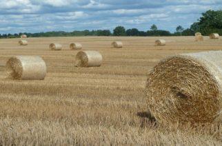 Τη γεωργική βιομάζα του βορείου Έβρου θα μελετήσει το ΚΑΠΕ, ώστε ν' αξιοποιηθεί για παραγωγή ενέργειας