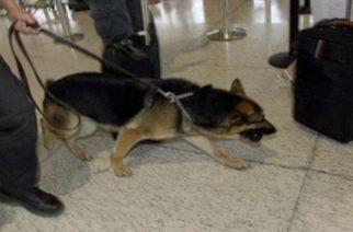 Αλεξανδρούπολη: Ο αστυνομικός σκύλος ανακάλυψε τα ναρκωτικά που καλλιεργούσε 41χρονος σπίτι του
