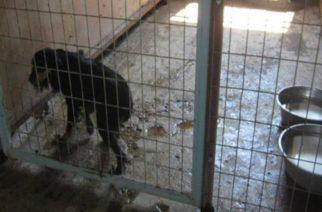 Αλεξανδρούπολη: Προσπάθησε να πουλήσει σκύλο από παράνομο εκτροφείο. Ο πελάτης ήταν αστυνομικός και τη συνέλαβε