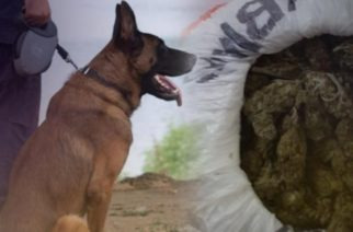 Έξι Έλληνες και ένας αλλοδαπός συνελήφθησαν για ναρκωτικά στη Σαμοθράκη