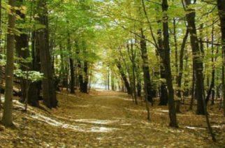 Απαγορεύεται η κυκλοφορία αυτοκινήτων και εκδρομέων σε δάση λόγω αυξημένου κινδύνου πυρκαγιών
