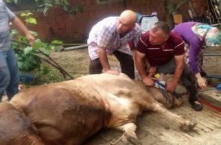 """Οι οδηγίες της Περιφέρειας ΑΜ-Θ για σφαγή ζώων για το """"Κουρμπάν Μπαϊράμ"""""""
