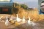 ΒΙΝΤΕΟ: Οι πάπιες της Άνθειας και όσοι έκαναν την… πάπια στην τσιμέντωση της οδού Κύπρου