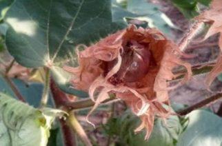 """Αποζημιώσεις για το 100% των ζημιών απ' το """"πράσινο σκουλήκι"""" ζητάει με ερώτηση το ΚΚΕ"""