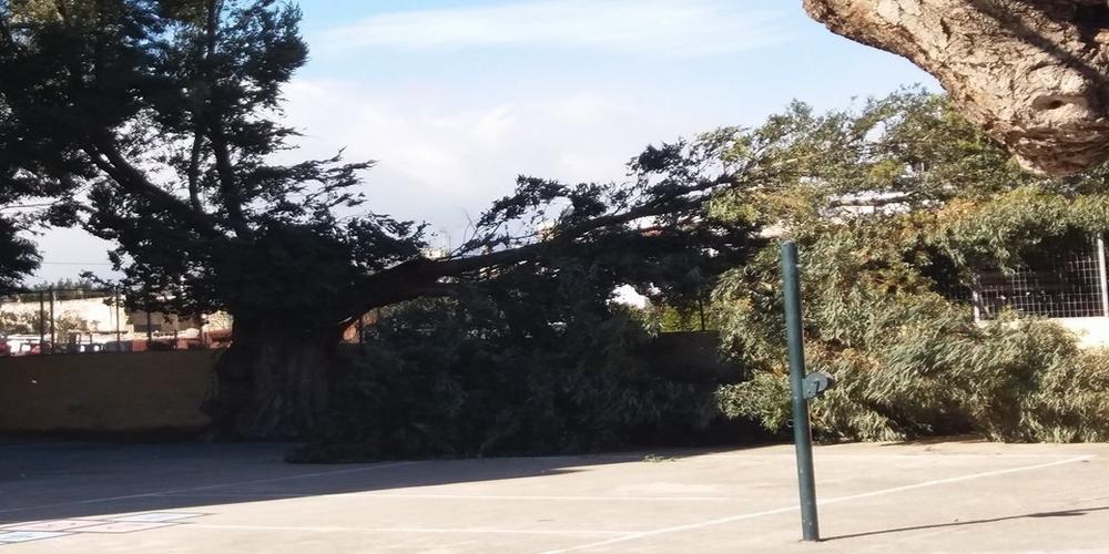 """Ανάστατοι οι γονείς, καταγγέλουν το δήμο Αλεξανδρούπολης για αδιαφορία. """"Δέντρο παραλίγο να καταπλακώσει μαθητές, καθηγητή"""""""