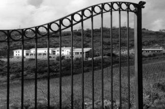 Σαμοθράκη: Επενδύσεις με επέκταση των αμπελώνων της ΜΕΛΜΑΡ κάνει ο Φώτης Μανούσης