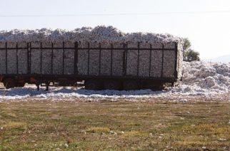 Μεγάλη μείωση κατά 25% στην φετινή παραγωγή βαμβακιού στον Έβρο