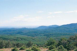 Η απάντηση του Αναπληρωτή Δασών Ν.Έβρου για τα υψηλά ποσοστά έκπτωσης σε δυο διαγωνισμούς
