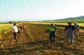 Καταργείται η καταβολή τέλους επιτηδεύματος για αγρότες, αγροτικούς συνεταιρισμούς, ΚΟΙΝΣΕΠ – Όλη η τροπολογία