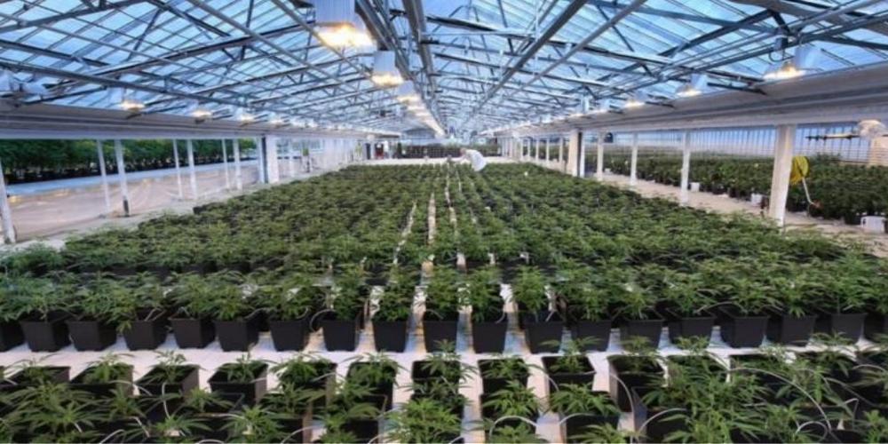 """""""Απάτη"""" η καναδική Aphria που σχεδίαζε επενδύσεις για τη φαρμακευτική κάνναβη στην Ξάνθη"""
